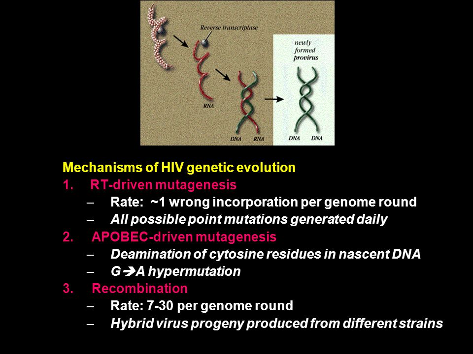 Mechanisms of HIV genetic evolution RT-driven mutagenesis