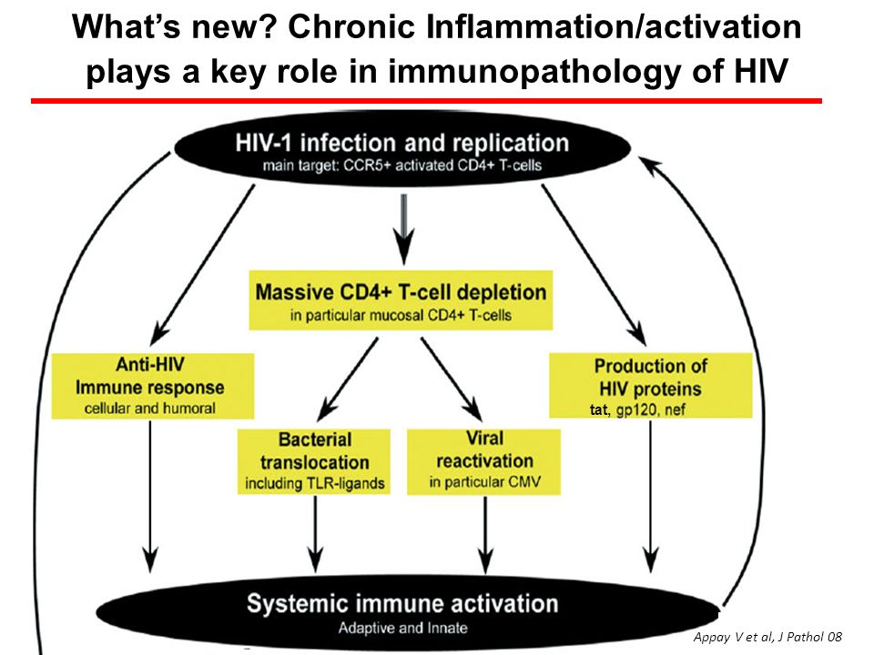 What's new Chronic Inflammation/activation plays a key role in immunopathology of HIV