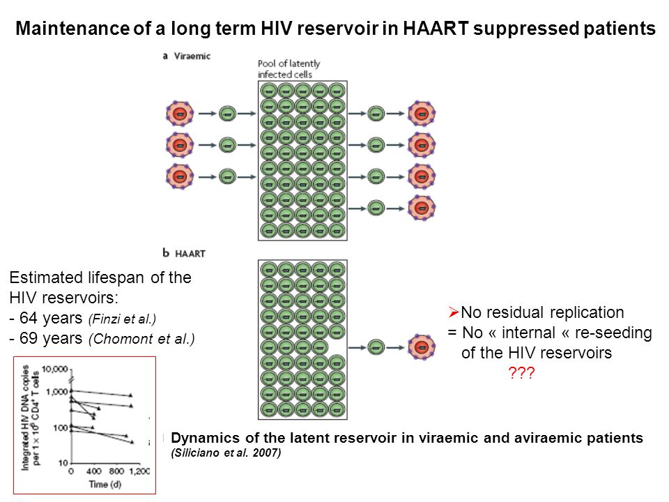 Maintenance of a long term HIV reservoir in HAART suppressed patients