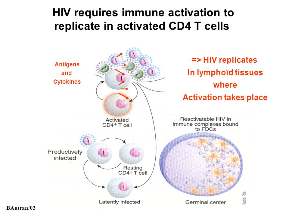 HIV requires immune activation to Activation takes place