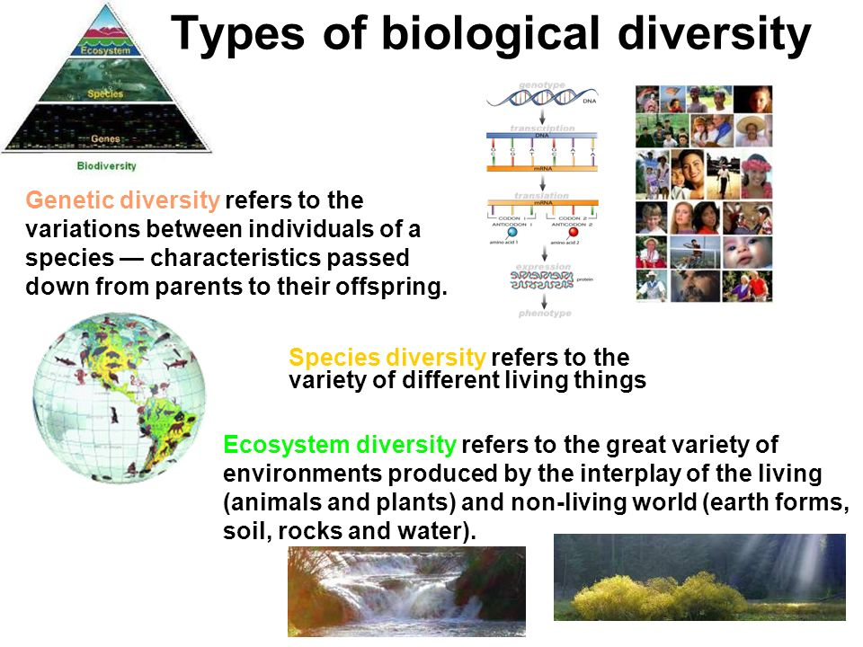 Biodiversity and its value ecosystem change human well for Different types of soil and their characteristics