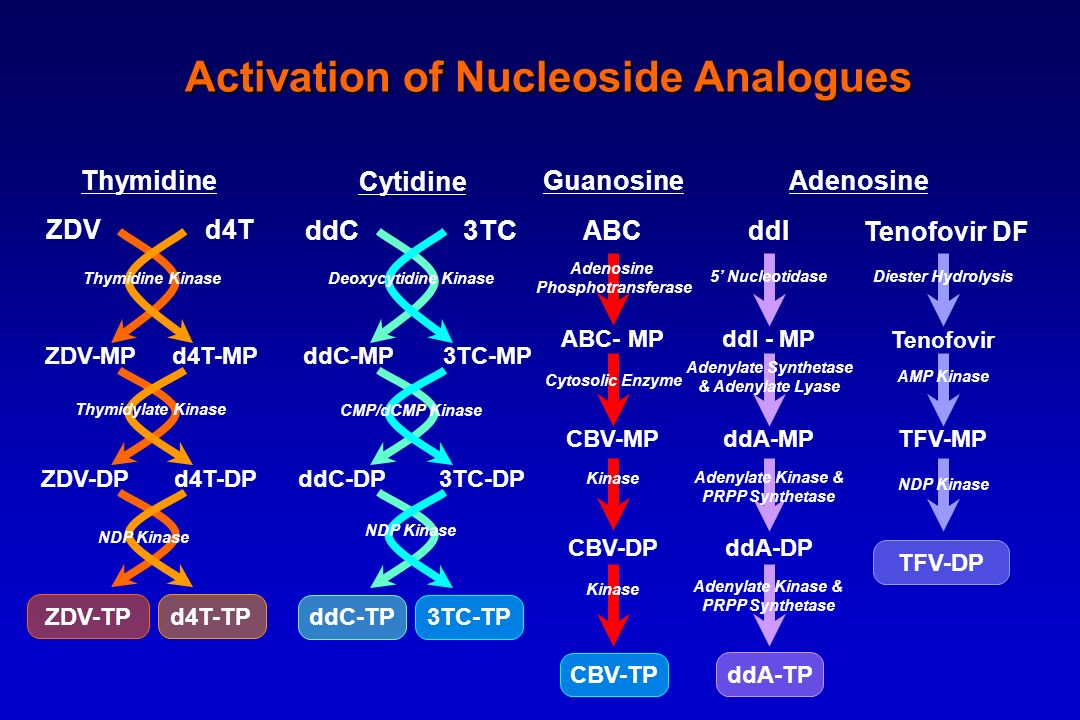Activation of Nucleoside Analogues
