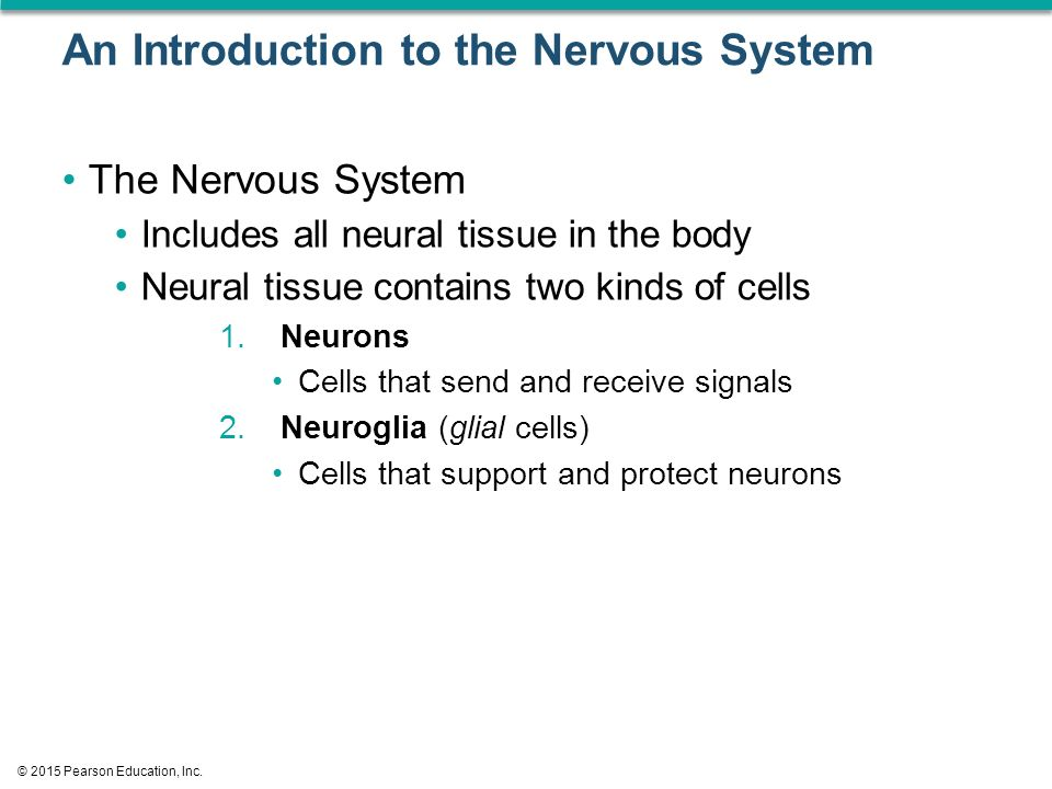 an introduction to the nervous system Xem video introduction to the skeletal system learn about the main divisions of the skeleton and the different shapes of bones that together  introduction to the nervous.