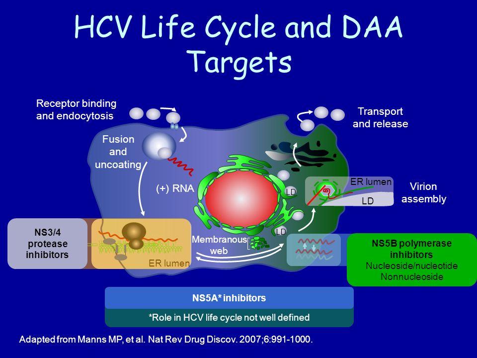 HCV Life Cycle and DAA Targets