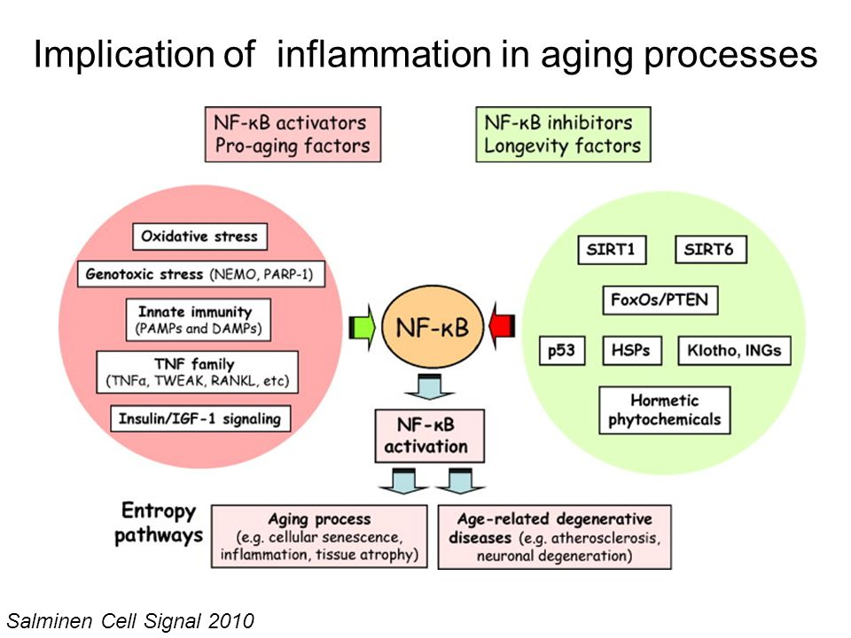 Implication of inflammation in aging processes