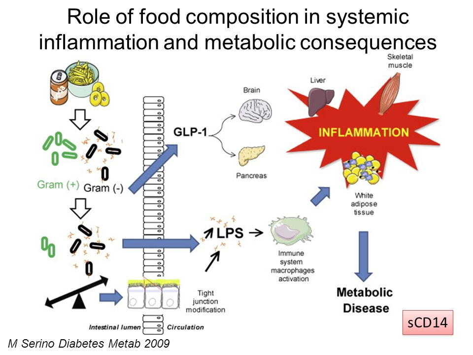 Role of food composition in systemic inflammation and metabolic consequences