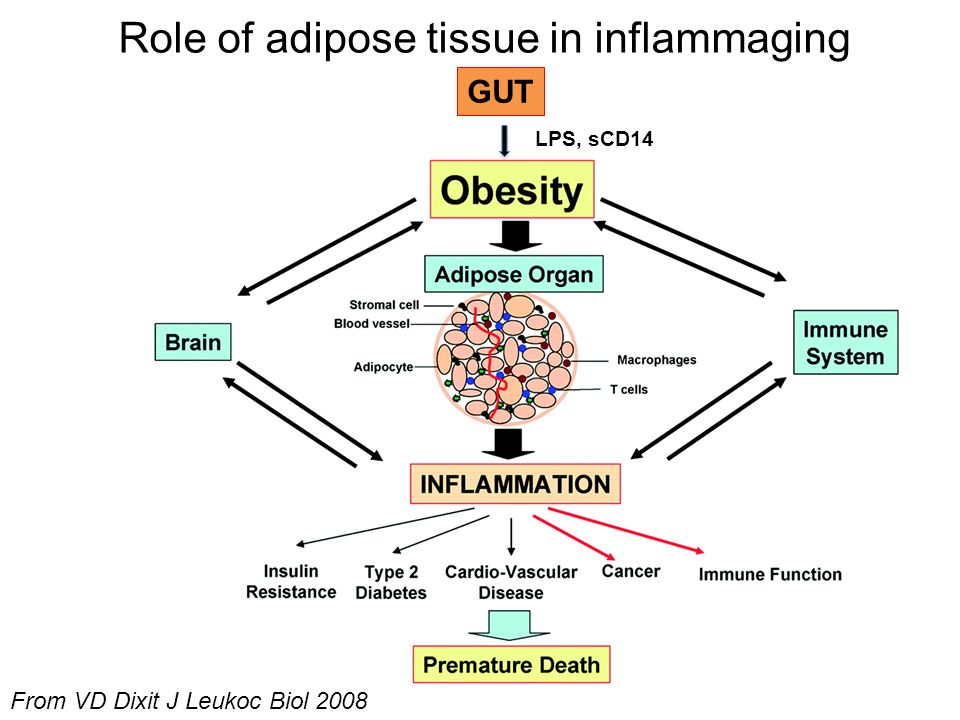 Role of adipose tissue in inflammaging