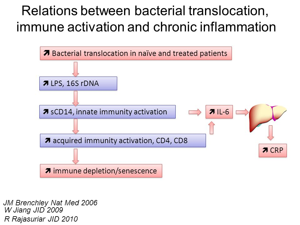 Relations between bacterial translocation,