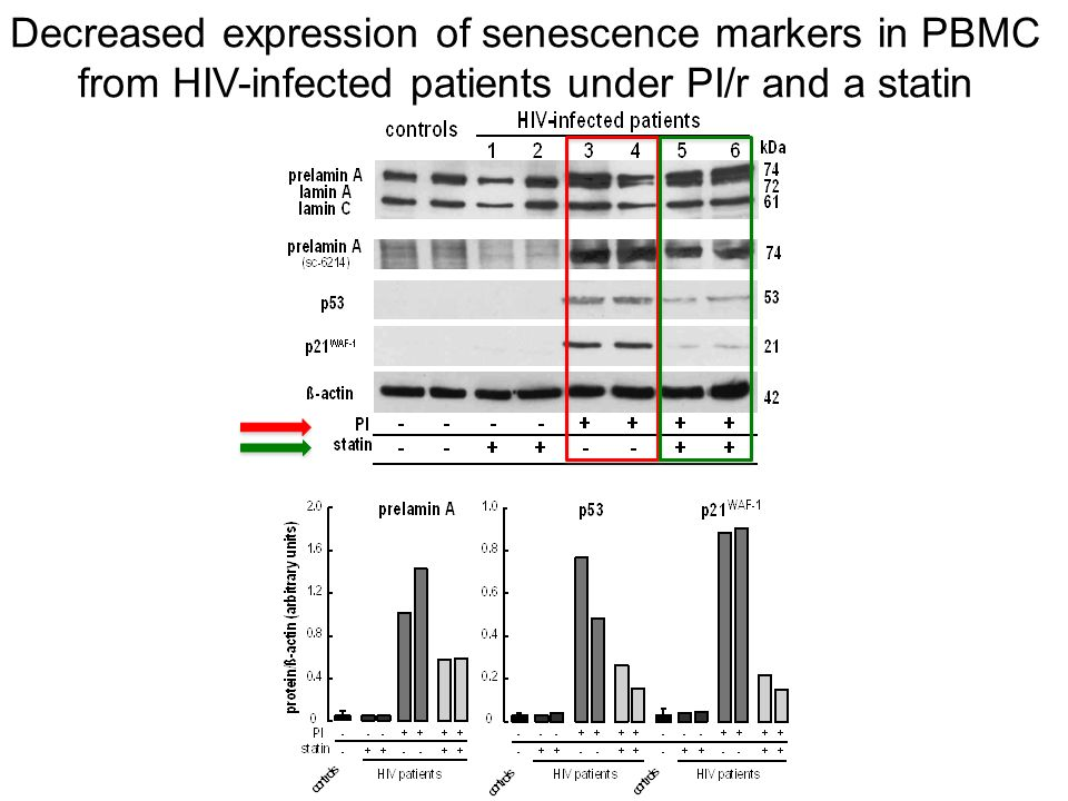 Decreased expression of senescence markers in PBMC from HIV-infected patients under PI/r and a statin