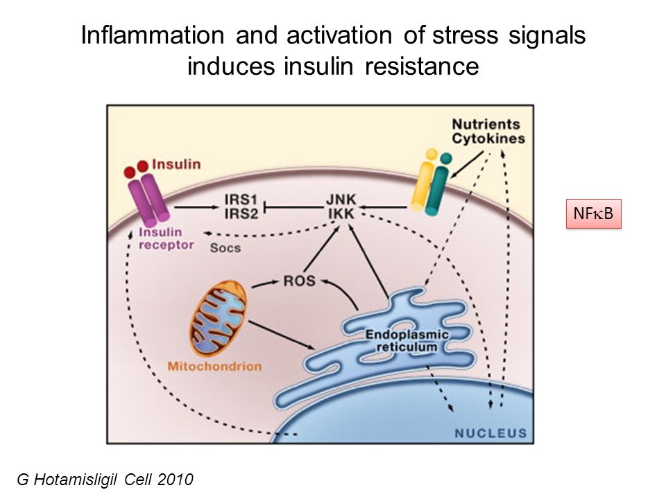 Inflammation and activation of stress signals induces insulin resistance