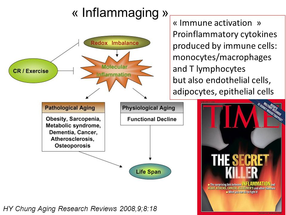 « Inflammaging » « Immune activation »
