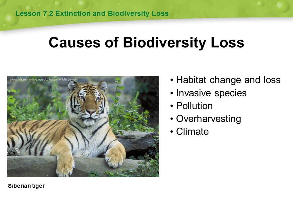biodiversity and extinction Australia, like much of the world, is in the midst of a biodiversity crisis:  what's  happening around us as the 'sixth great species extinction.