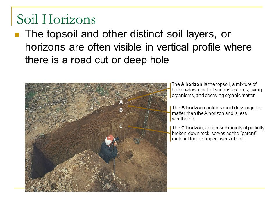 Chapter 37 plant nutrition ppt download for Soil horizons