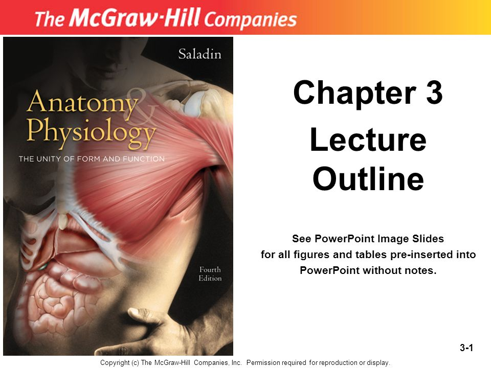 Chapter 3 Lecture Outline - ppt video online download