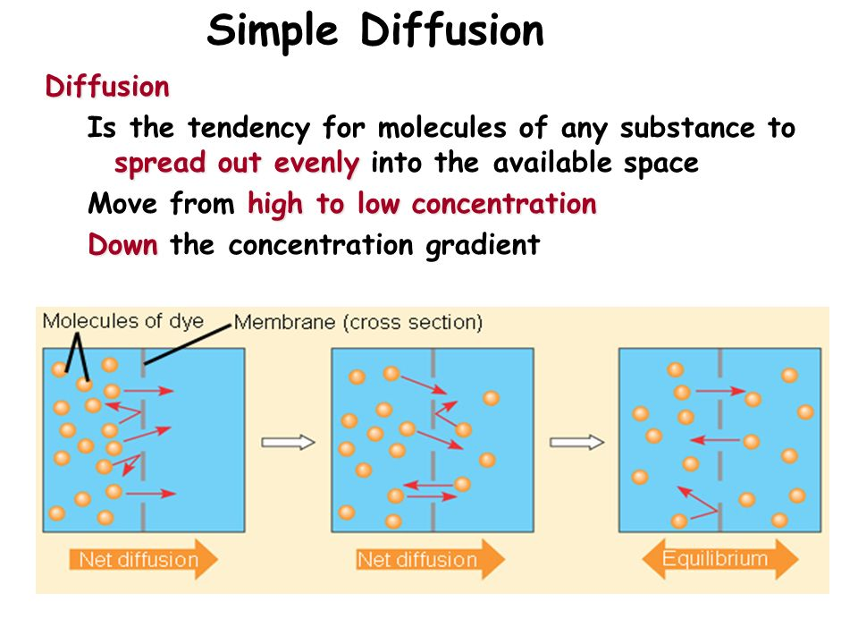 Membrane Structure and Function - ppt video online download