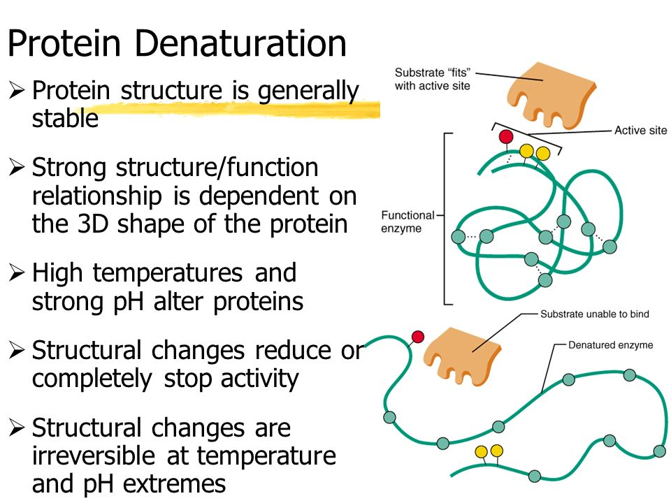 protein and enzyme relationship