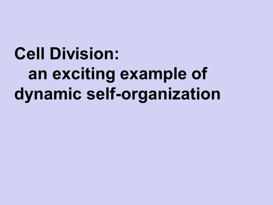 division of self This division serves the approximately 57 million small businesses and self- employed taxpayers.