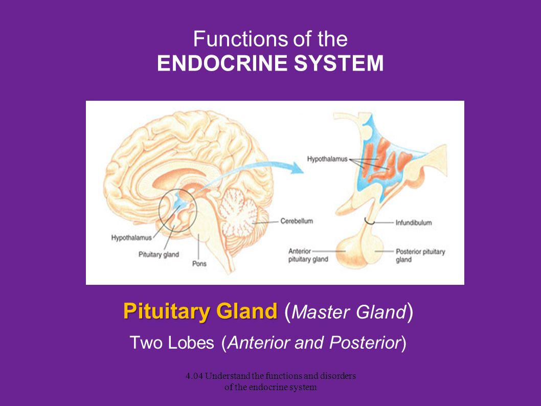 an analysis of the disorders of the endocrine gland