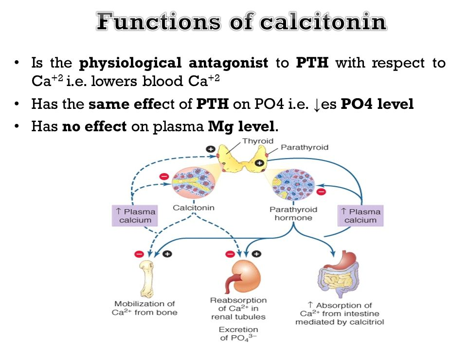 Functions of calcitonin
