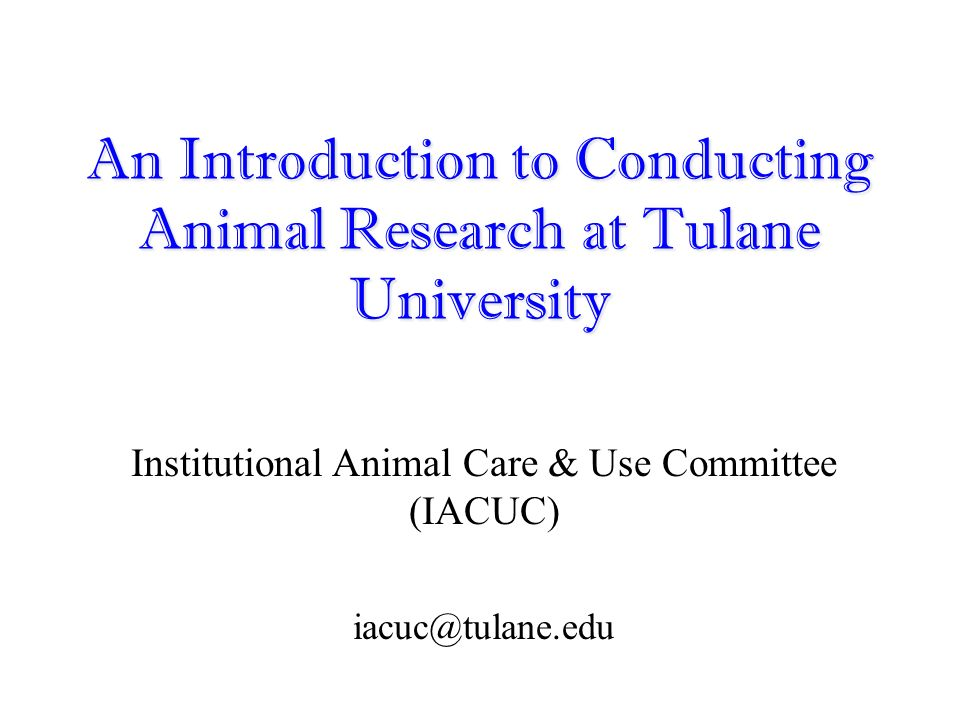 intro animal experimentation is of Argument essay: animal experimentation  there has been a controversy between animal rights supporters and scientists about whether it.