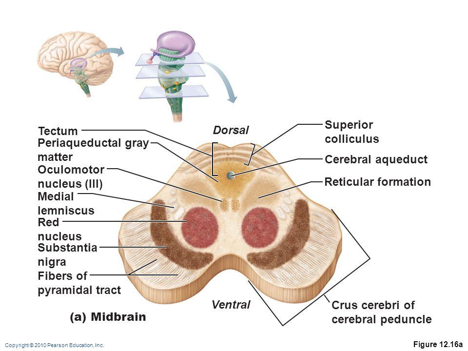 Groß Bsc Anatomie Und Physiologie Ideen - Anatomie Ideen - finotti.info