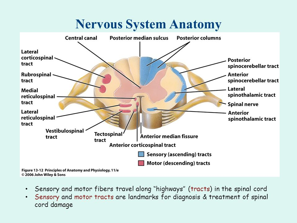 Anatomy of central nervous system ppt