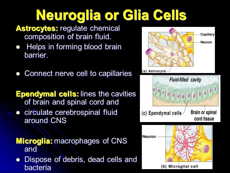 The Nervous System Chapter ppt video online download