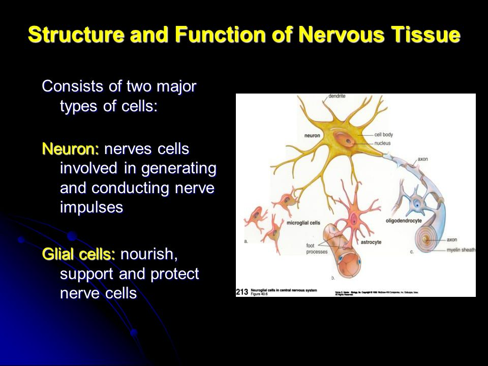 Structures and functions of cells in nervous system biology essay