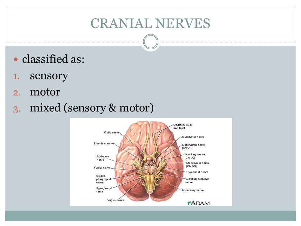 HONORS ANATOMY & PHYSIOLOGY - ppt video online download