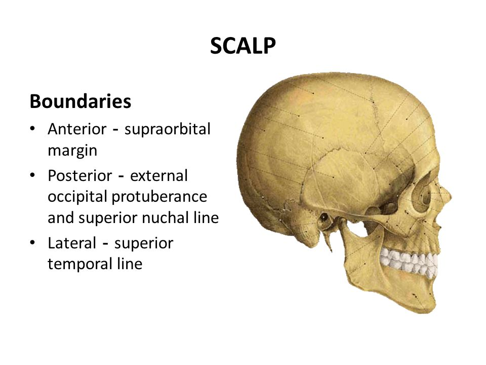 SCALP Boundaries Anterior-supraorbital margin