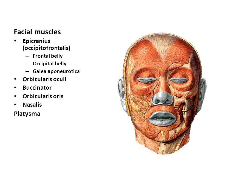 dr. lubna nazli associate professor anatomy - ppt video online, Human Body