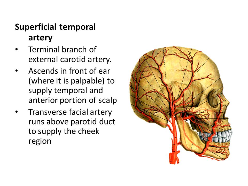 Superficial temporal artery