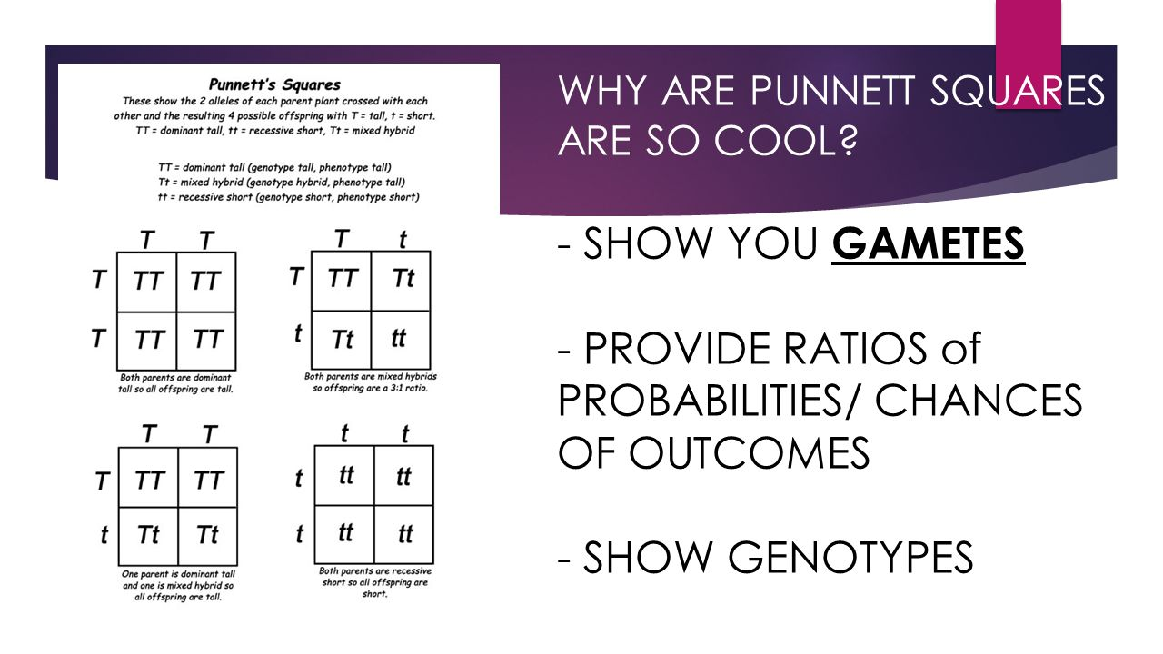 WHY ARE PUNNETT SQUARES ARE SO COOL