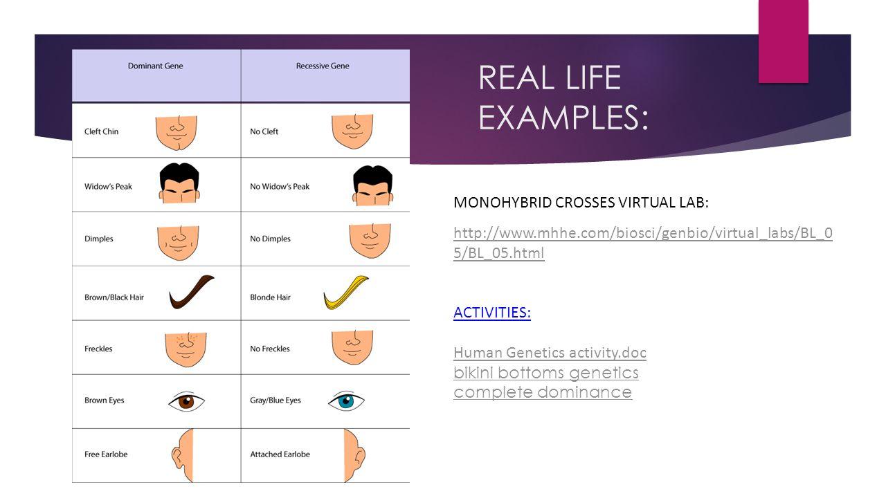 REAL LIFE EXAMPLES: MONOHYBRID CROSSES VIRTUAL LAB: