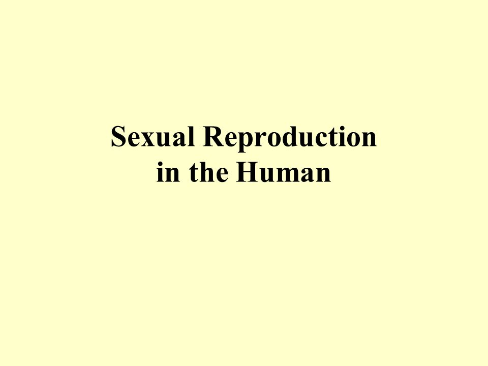 Sexual Reproduction In The Human Ppt Video Online Download