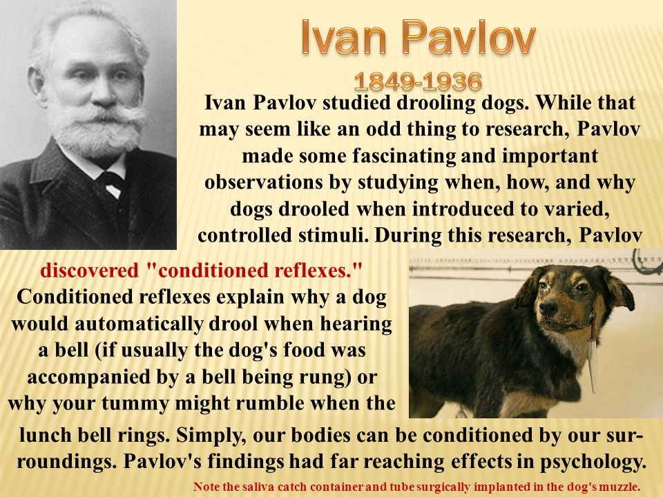 a biography of ivan petrovich pavlov the world famous russian physiologist Definition of pavlov, ivan ivan petrovich pavlov was inspired by viewed together with the contributions of other world-famous russian scientists.