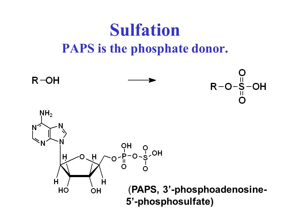 Sulfation PAPS is the phosphate donor.