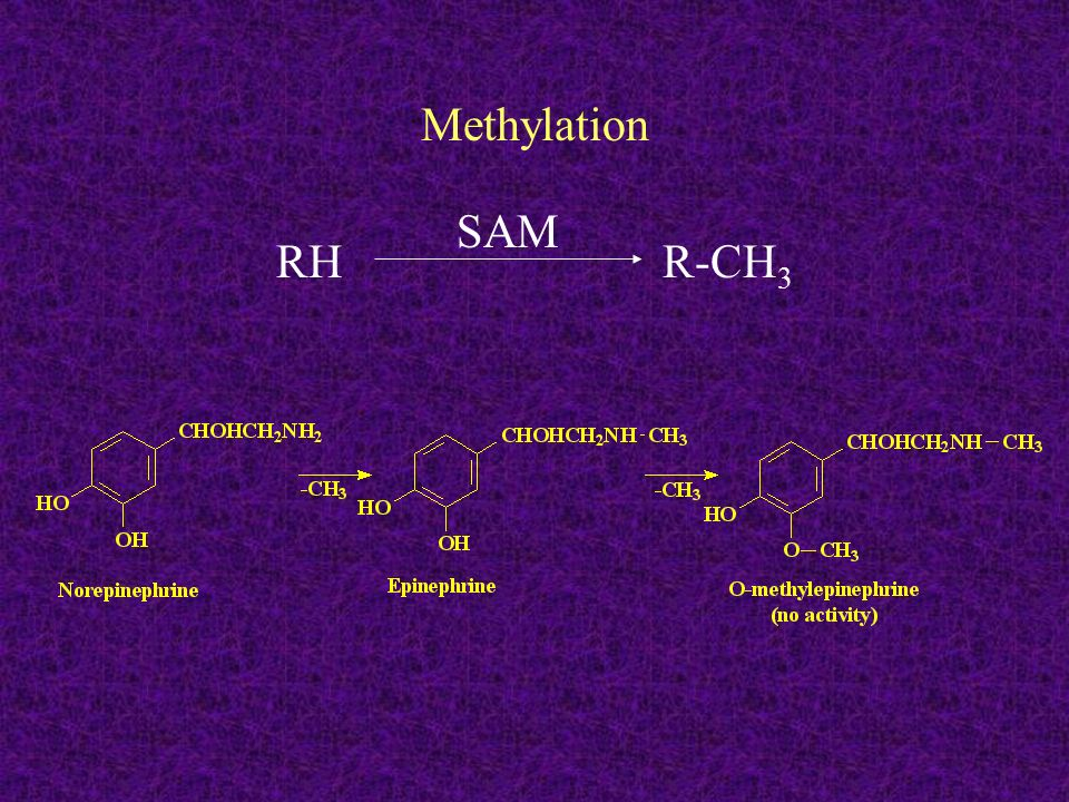 Methylation RH R-CH3 SAM