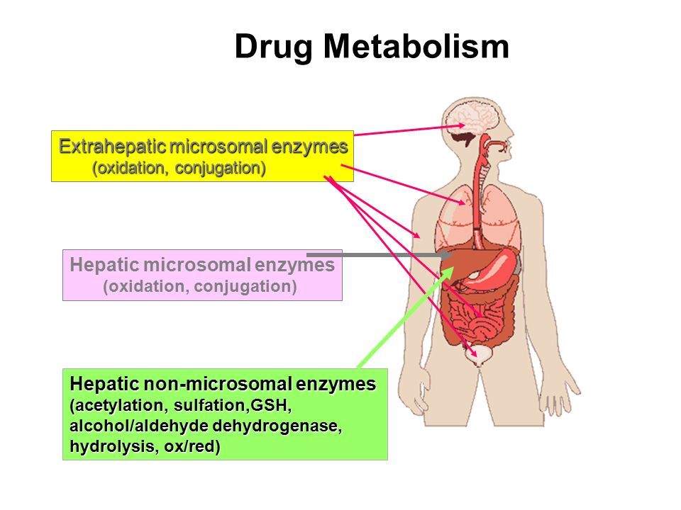 Drug Metabolism Extrahepatic microsomal enzymes