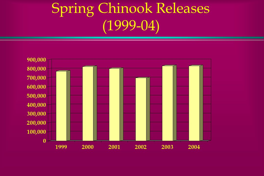 Spring Chinook Releases (1999-04)