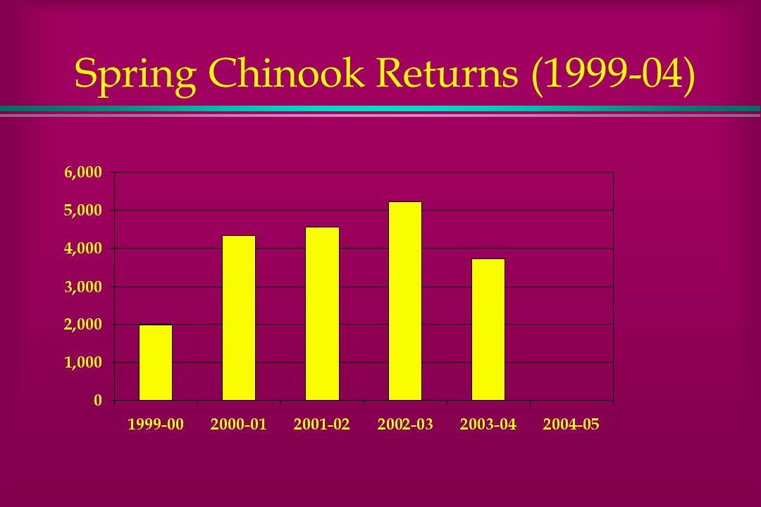 Spring Chinook Returns (1999-04)