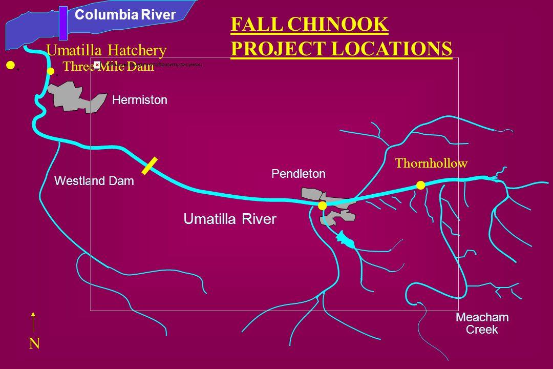 . . FALL CHINOOK PROJECT LOCATIONS . Umatilla Hatchery . N
