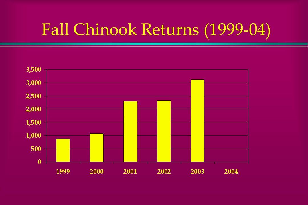 Fall Chinook Returns (1999-04)