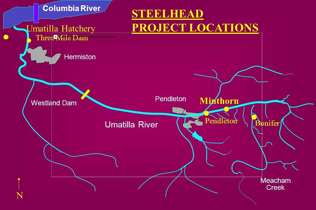 . . . STEELHEAD PROJECT LOCATIONS . Umatilla Hatchery . Minthorn N