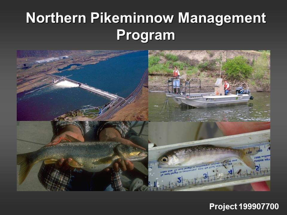 Northern Pikeminnow Management Program