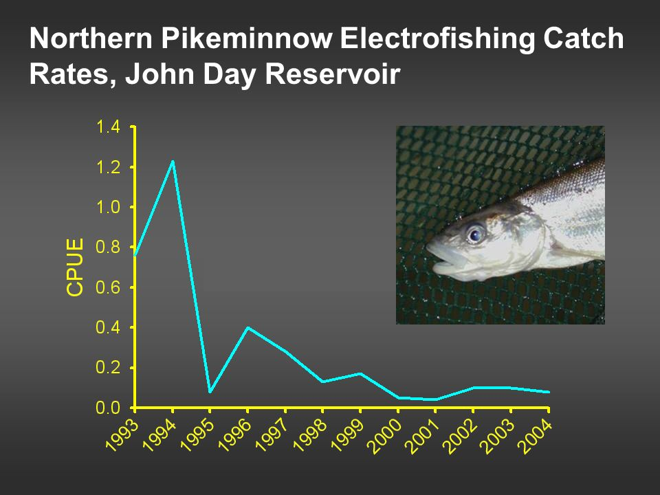 Northern Pikeminnow Electrofishing Catch Rates, John Day Reservoir