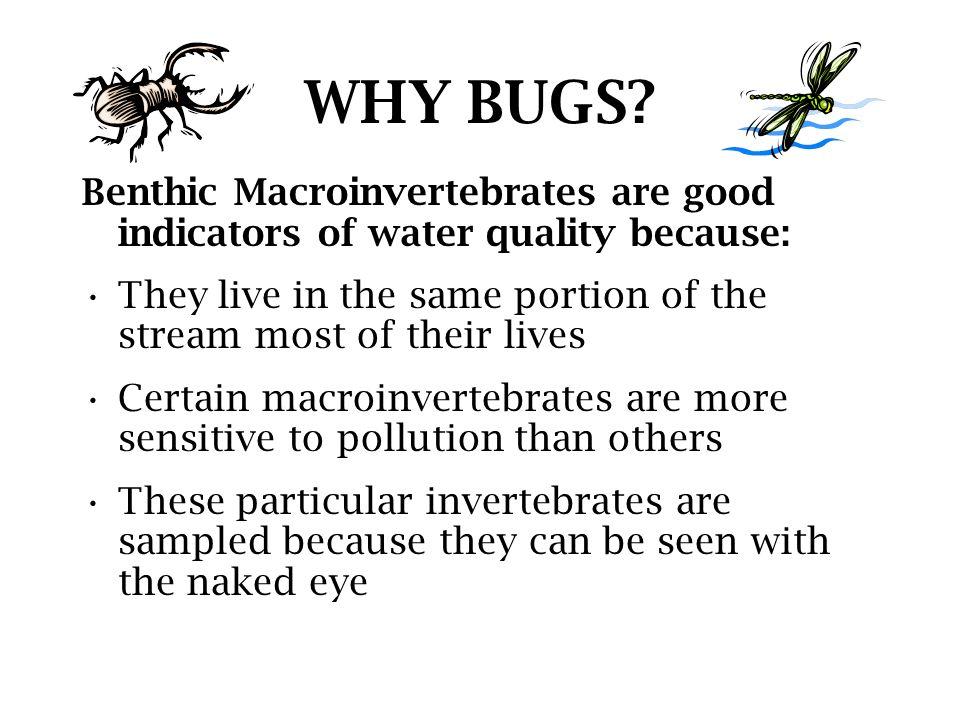 Macroinvertebrate Mayhem!