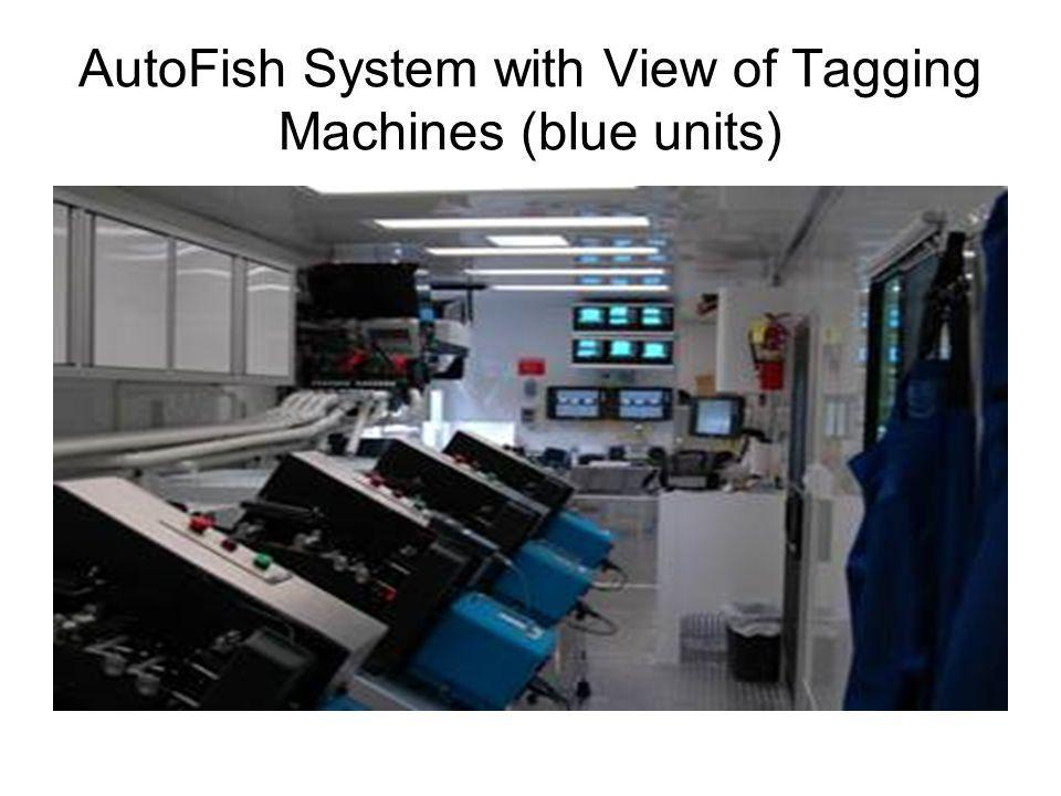 AutoFish System with View of Tagging Machines (blue units)