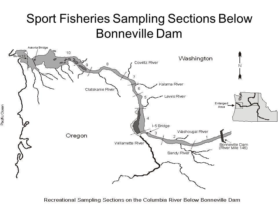 Sport Fisheries Sampling Sections Below Bonneville Dam