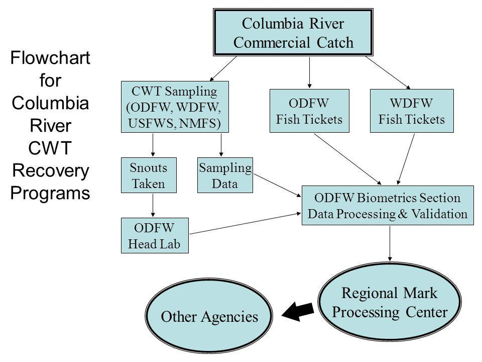 Flowchart for Columbia River CWT Recovery Programs